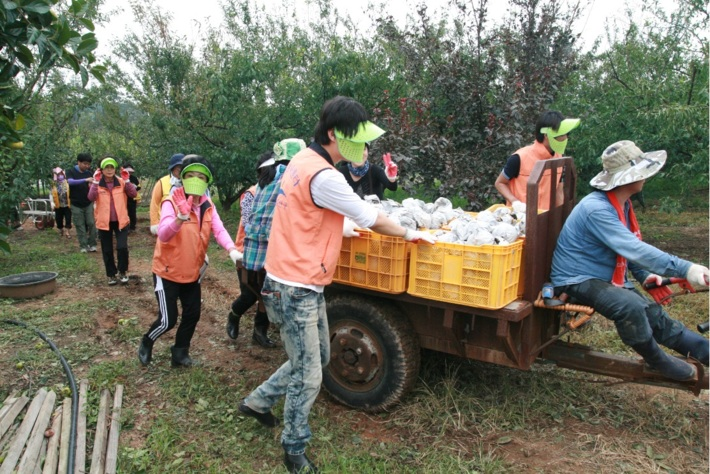 태풍피해 농가 복구활동
