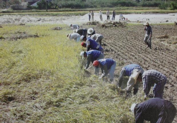 2002 강릉 태풍 루사 피해 및 복구 현장 (60/73)